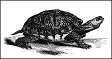 Tortoise Tortoise Tortoise